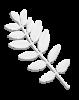 acacia_leaf_bw
